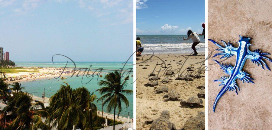 Praia Bairro Novo, Playas de Pernambuco Praia Carne de Vaca, mejores playas del norte de brasil, playas de pernambuco, praia da piedade