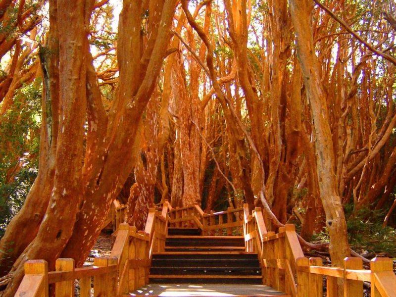 Bosque de Arrayanes, foto, villa la angostura, arrayán, lago, puerto manzano, patagonia, defiestaenamerica.com