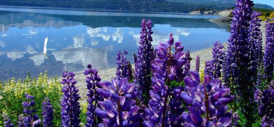 Isla Victoria, foto, villa la angostura, arrayán, lago, puerto manzano, patagonia, defiestaenamerica.com