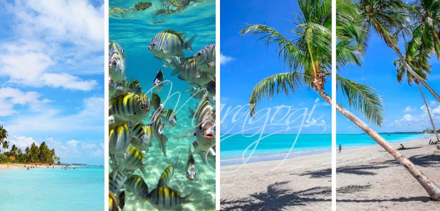 viaje a maragogi, maragogi hoteles, porto de galinhas, pernambuco, recife, brasil norte